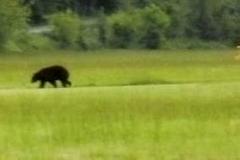 byrds airstrip bear