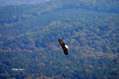 byrds airstrip eagle valerie layne